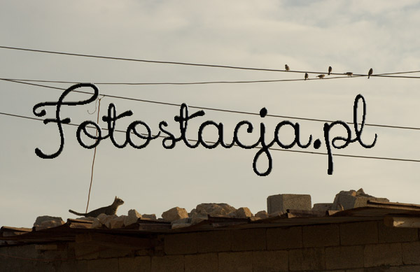 Fotostacja.pl - Miron Bogacki